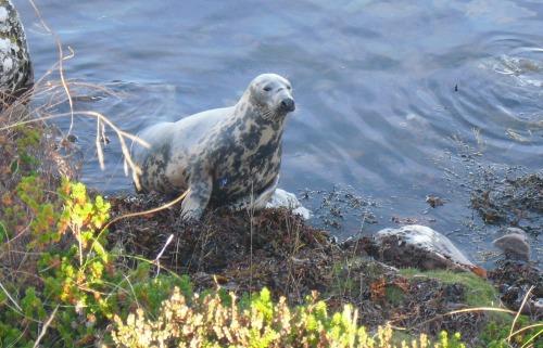 Seals068
